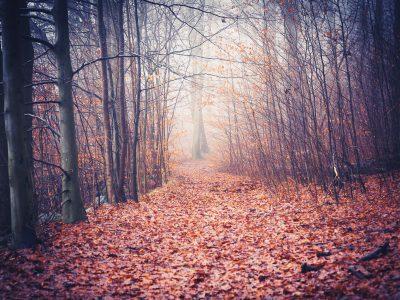 trail_T1B0079